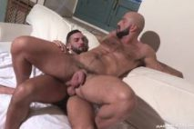 Étalons arabes machos : Abraham Al Malek & Bruno Boni (Raging Stallion)
